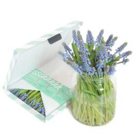 Blauwe Druifjes brievenbusbloemen